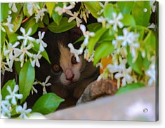 Acrylic Print featuring the photograph Peek-a-boo by Richard Patmore