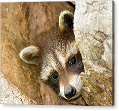Acrylic Print featuring the photograph Peek A Boo by Timothy McIntyre