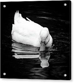 Peek-ing Duck Acrylic Print