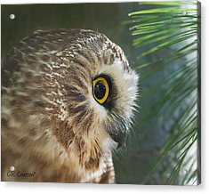 Peeking Out Acrylic Print