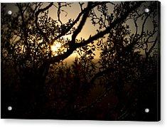 Peeking Sun Acrylic Print by Mike Hill