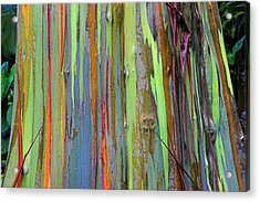 Acrylic Print featuring the photograph Peeling Bark- St Lucia. by Chester Williams