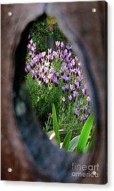 Peephole Garden Acrylic Print by CML Brown