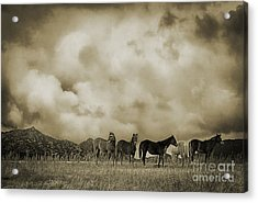 Peeples Valley Horses In Sepia Acrylic Print by Priscilla Burgers