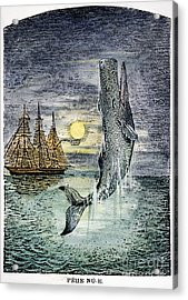 Pehe Nu-e: Moby Dick Acrylic Print by Granger