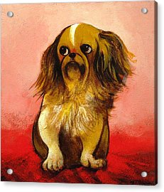 Pekinese Acrylic Print by Christine McGinnis
