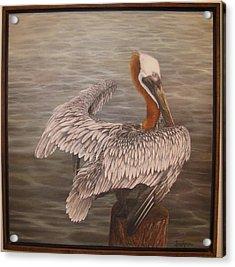 Pelican 3 Brown Acrylic Print by Judy Merrell
