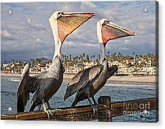 Pelican - A Happy Landing Acrylic Print