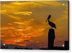 Pelican At Silver Lake Sunset Ocracoke Island Acrylic Print