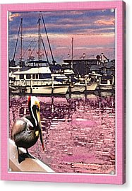 Pelican At Sunset 1 Acrylic Print by John Breen