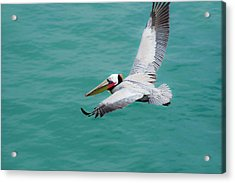 Pelican Beautiful Acrylic Print