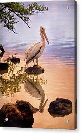 Pelican Connection 2 Acrylic Print