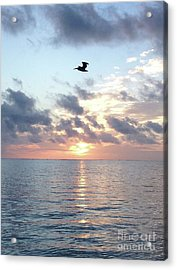 Pelican Dawn Acrylic Print