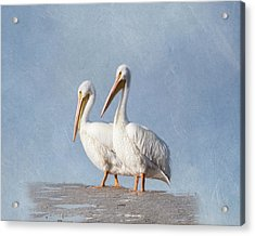 Acrylic Print featuring the photograph Pelican Duo by Kim Hojnacki