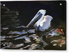 Pelican II Oil Painting Acrylic Print
