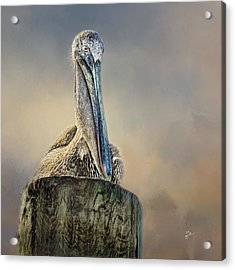 Pelican In Paradise Squared Acrylic Print