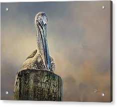 Pelican In Paradise Acrylic Print