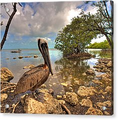 Pelican In The Florida Keys Acrylic Print