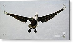 Acrylic Print featuring the painting Pelican Landing by Jimmie Bartlett