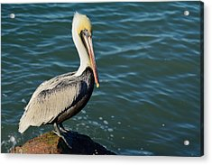 Acrylic Print featuring the photograph Pelican On A Rock by Bradford Martin