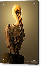 Pelican On Piling Acrylic Print by Don Durfee