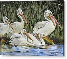 Pelican Parade Acrylic Print