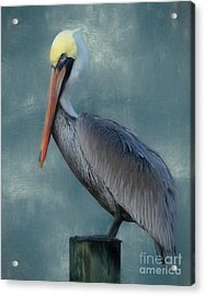Acrylic Print featuring the photograph Pelican Portrait by Benanne Stiens