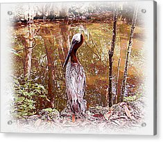 Pelican Posed Acrylic Print by Martha Ayotte