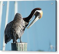 Acrylic Print featuring the photograph Pelican Preen by Lynda Dawson-Youngclaus