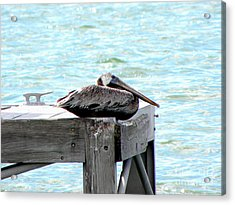 Acrylic Print featuring the photograph Pelican Resting by Terri Mills