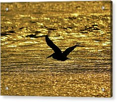 Pelican Silhouette - Golden Gulf Acrylic Print by Al Powell Photography USA