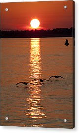 Pelican Sunset Acrylic Print by Dustin K Ryan
