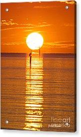 Pelican Sunset Acrylic Print