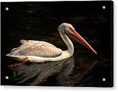 Pelican Swimming In Salisbury Acrylic Print