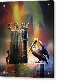 Pelican Ways Acrylic Print