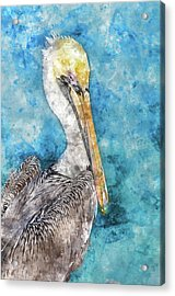 Pelican With Blue Ocean Background Acrylic Print