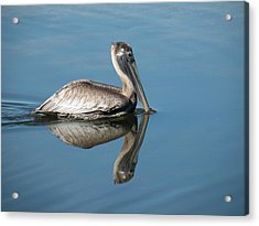 Pelican With Reflection Acrylic Print by Rosalie Scanlon