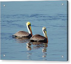 Pelicans 2 Together Acrylic Print