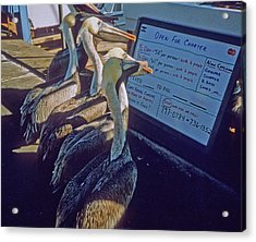 Pelicans And The Menu Acrylic Print