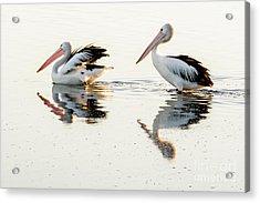 Pelicans At Dusk Acrylic Print by Werner Padarin