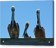 Pelicans At The Kure Beach Fishing Pier 2006 Acrylic Print