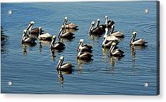 Pelicans Blue Acrylic Print