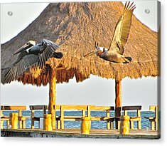 Acrylic Print featuring the photograph Pelicans In Flight by Sean Griffin