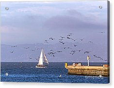 Acrylic Print featuring the photograph Pelicans Pelicans by Kate Brown
