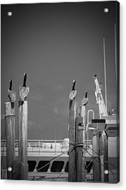 Pelicans Perched By Sailboat Acrylic Print by Megan Verzoni