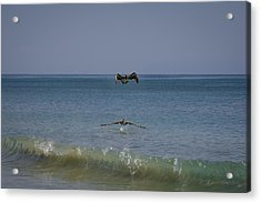 Pelican's Show Over The Ocean Acrylic Print