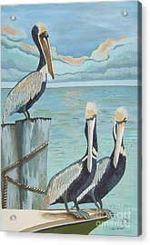 Pelicans Three Acrylic Print by Jennifer  Donald