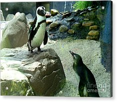 Penguin Friends Acrylic Print