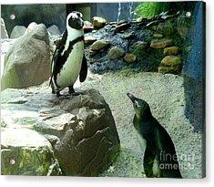 Penguin Friends Acrylic Print by Jeanne Forsythe