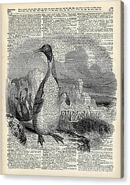 Penguin On Arctic Acrylic Print by Jacob Kuch